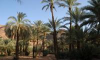 Excursions demi-journée - LA PALMERAIE ET LA KASBAH DES JUIFS - Villa Zagora
