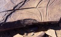 Excursions journée - Visite site de gravures rupestre de Tazarine - Villa Zagora