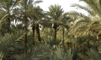 Vue terrasse de la Villa Zagora - Ma villa au Sahara